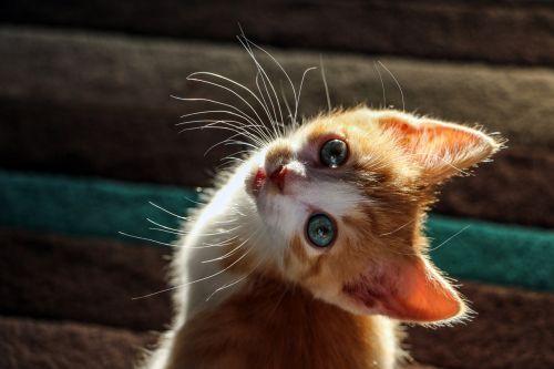 kitten cat cute kitten