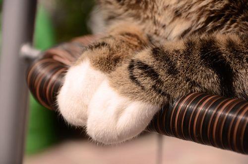 kitten cat feet