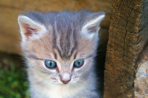 kitten beasts sorrow