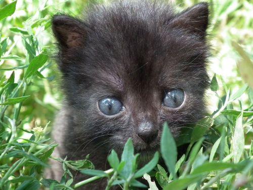 kitten little cat