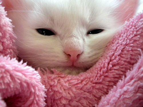 kitten cat fluffy cat