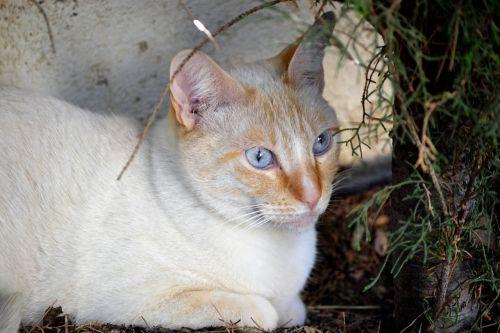 kitten feline pets