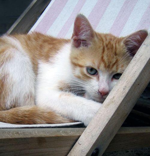kitten cat tomcat