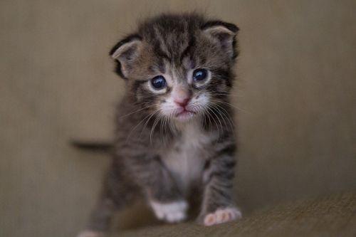 kitten cat baby