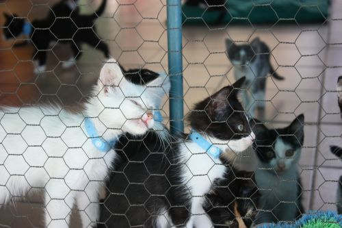kitten kennel cats