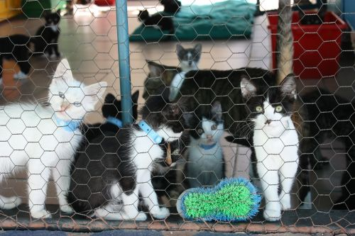 kitten kennel kitty
