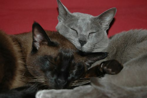 kitten m cat