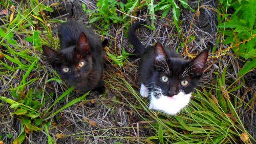 kitten cat pets