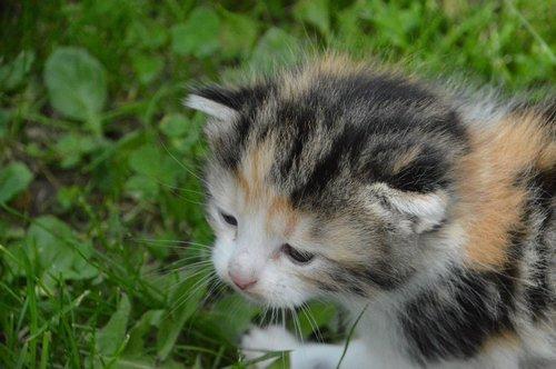 kitten  sniff  feel