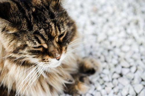 kitten cat sweet