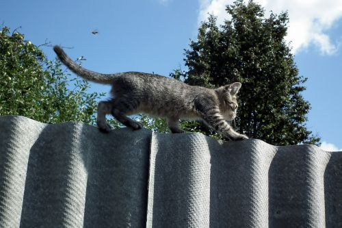 kitten fence cat