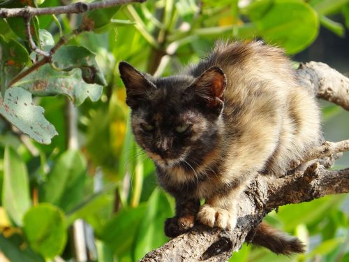 kitten cat feline