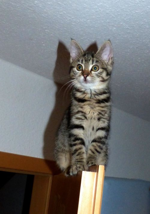 kitten climb door
