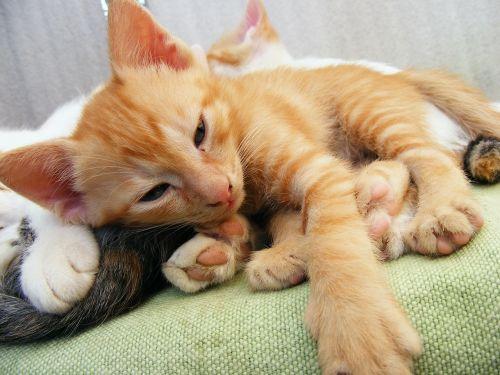 kitten pussycat cute