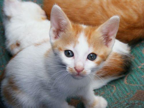 kitten pussycat cats