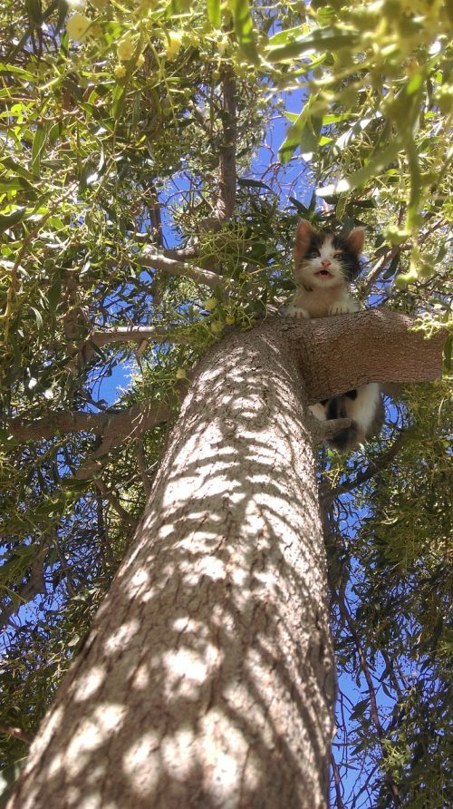 kitten tree issue