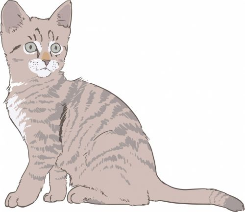 Kitten Color Drawing