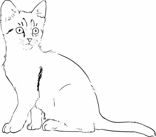 Kitten Lineart Drawing