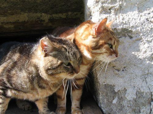 kittens wild stone