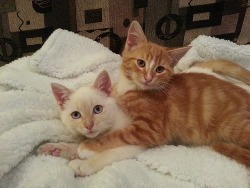 kittens playing friends