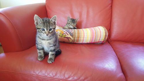 kittens sofa puppies