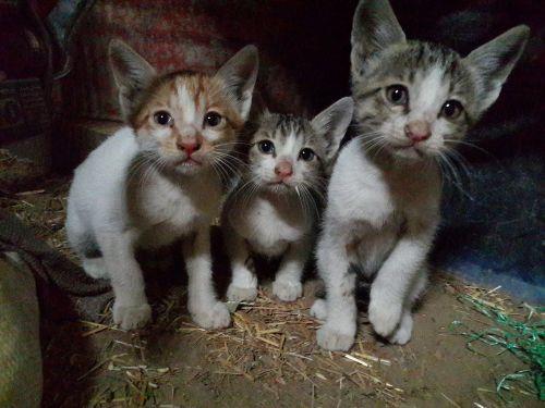 kittens cats felines