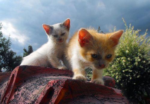 kittens cats chicks