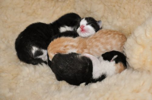 kittens animal shelter reborn