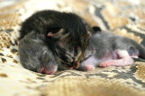 kittens  animals  cute
