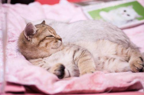 kittens kitten animals
