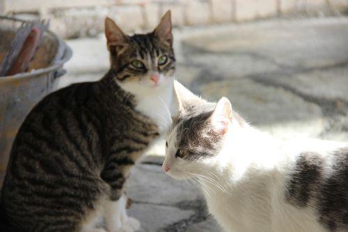 kittens animals felines