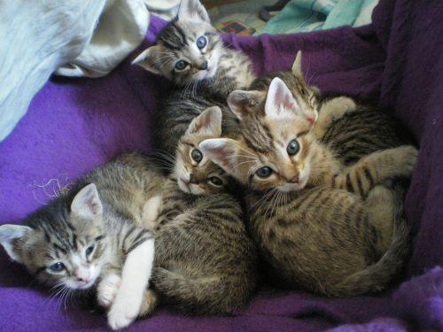 kittens eyes cat