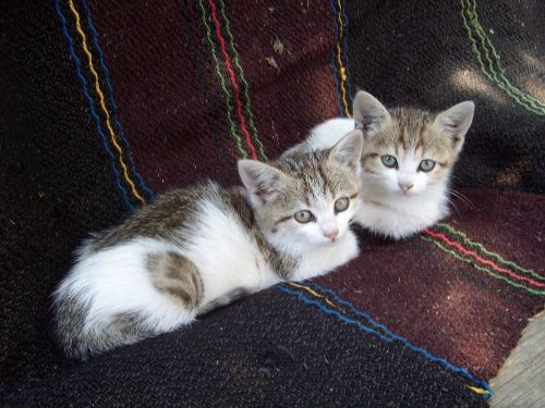 kittens resting domestic