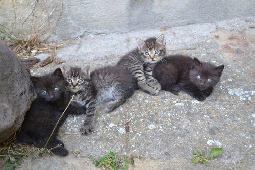 kittens diapers cute