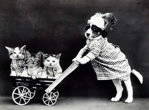 Kittens & Puppy Vintage Photo