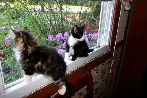 Kittens In Window