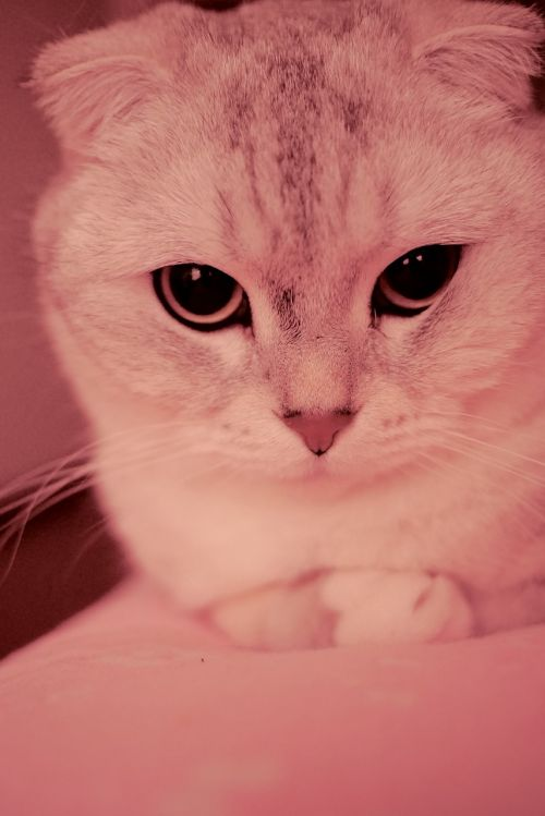 kitty folds silver gradient