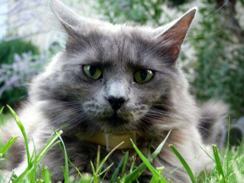 kitty kat face