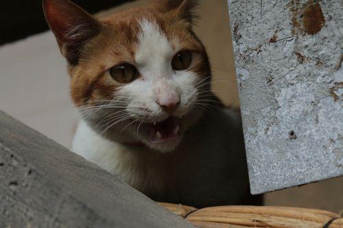 kitty pets stray cats