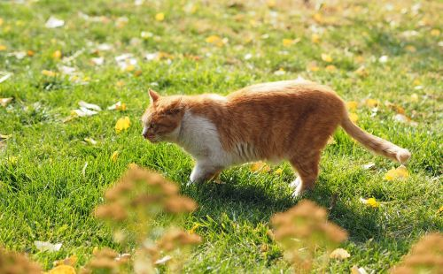 kitty grassland hunt