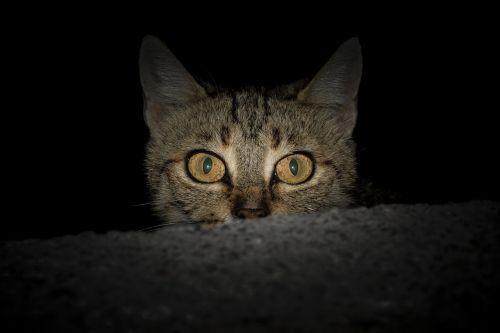 Kitty Hiding