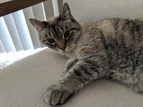 Kitty Kitty