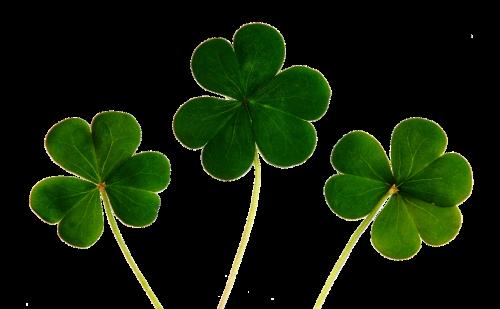 klee,keturių lapų dobilų,sėkmė,laimingas dobilas,žalias,vierblättrig,žvilgsniai,augalas,simbolis,laimingas žavesys,gamta,lapai,lapai,sėkmės simbolis,dobilas,planai