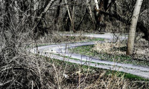 kelias, miškas, pavasaris, Kovas, gamta, purvinas & nbsp, kelias, kreivas, mediena, medžiai, fonas, nuotrauka, Laisvas, vingiuotas kelias