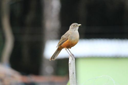 knew paige bird