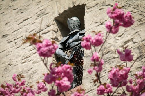 knight,armor,ritterruestung,middle ages,metal,harnisch,castle,wall,eifelburg,bad münstereifel,cherry blossom,cherry,historically,guard,japanese cherry trees,eifel,free photos,free images,royalty free