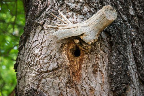 knothole nest nesting place