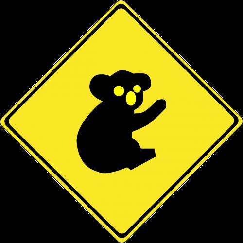koala koala bear animal