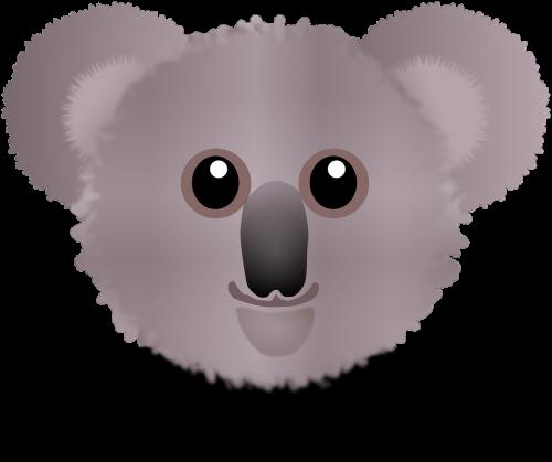 koala bear wombat