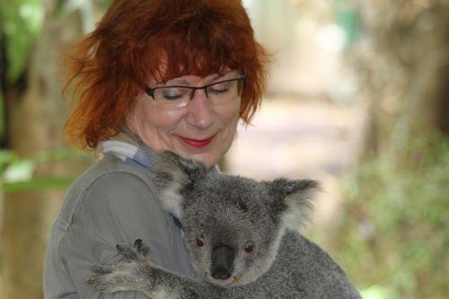 koala phascolarctos cinereus woman